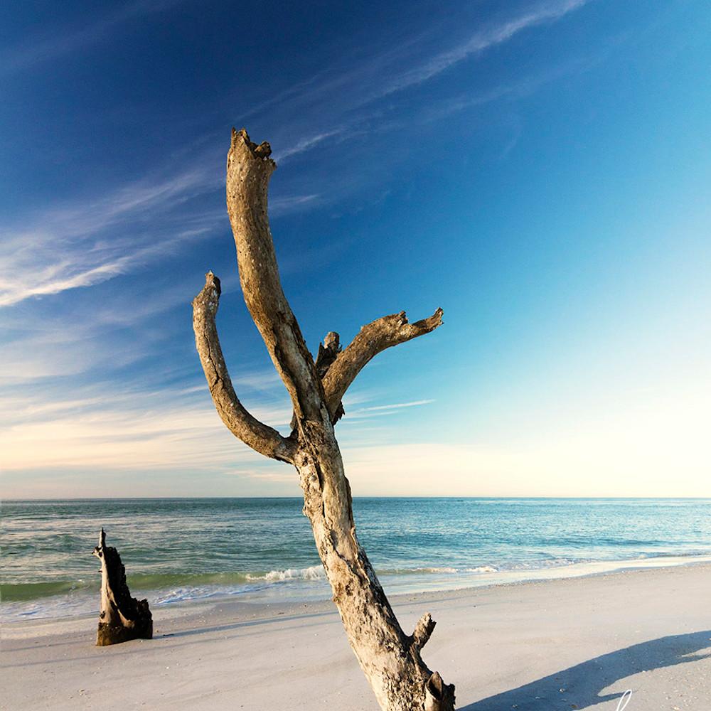 Saguaro driftwood rqsyf5