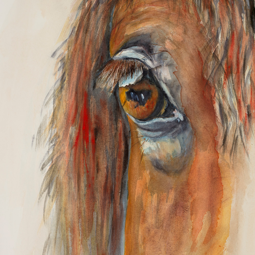 Untitled horse eye hires cjshjt