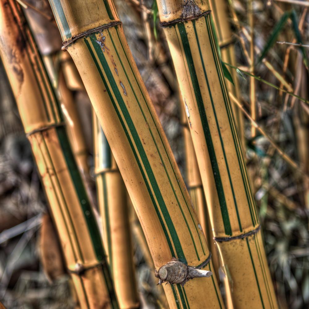 Bamboo kane podnf5