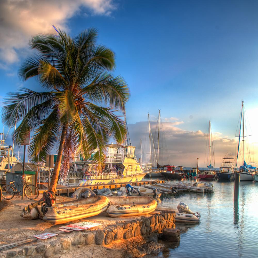 Harbor palm cquvkz