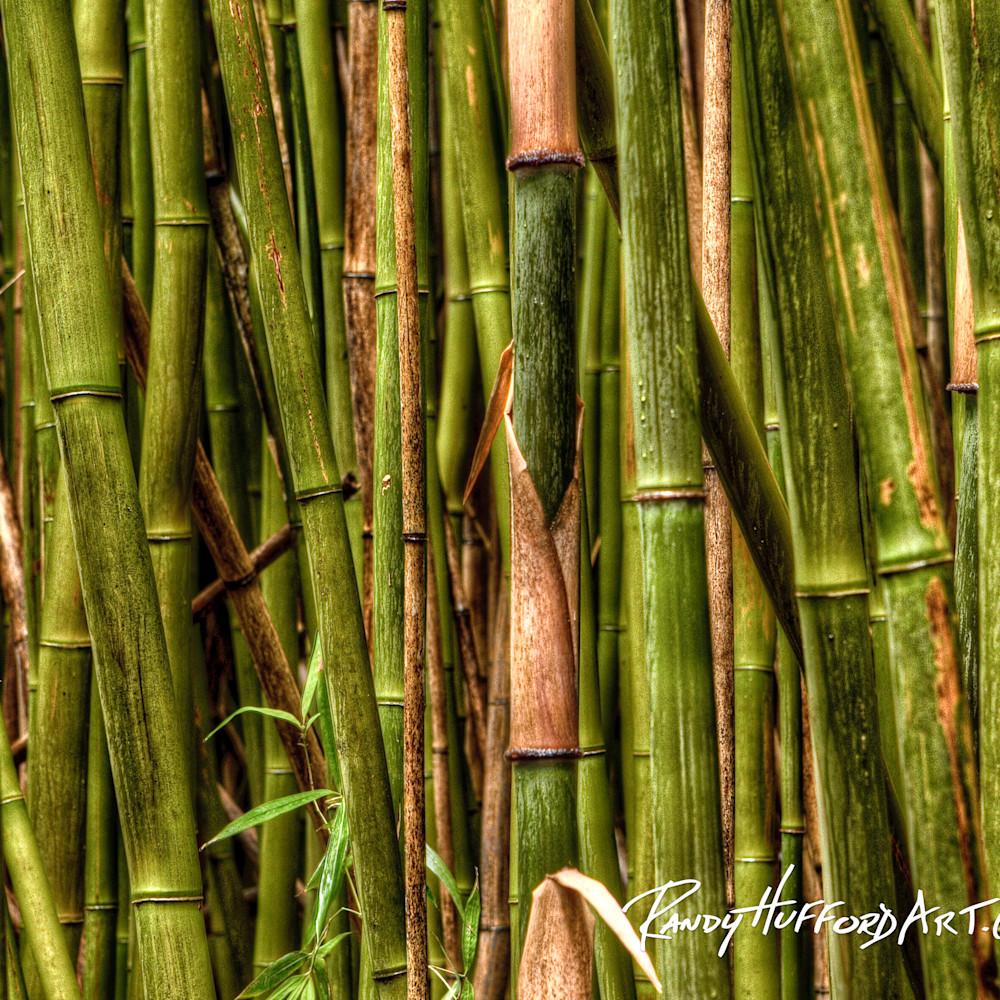 Rainforest bamboo ddk1tl