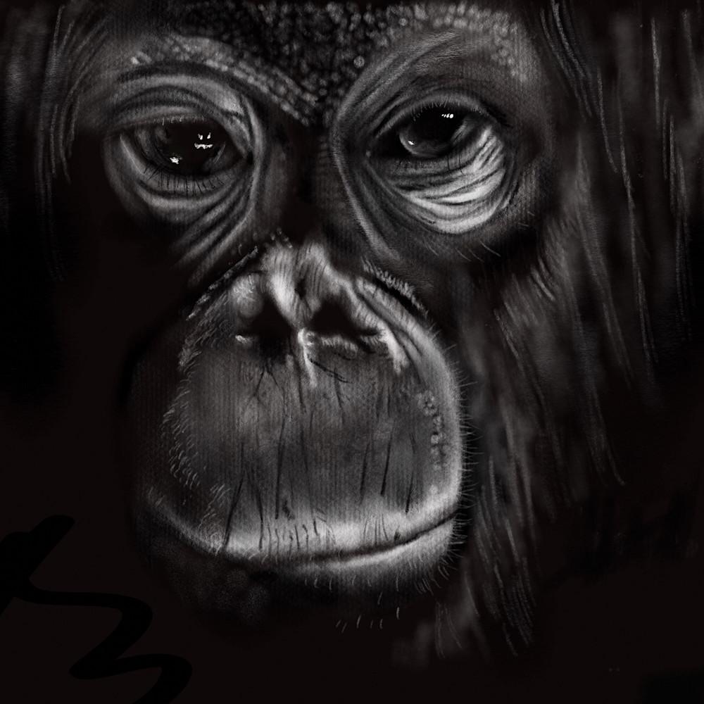 Monkey print ready yraxzi