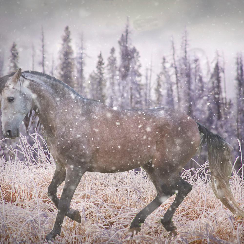 Winter trot hdo3rs