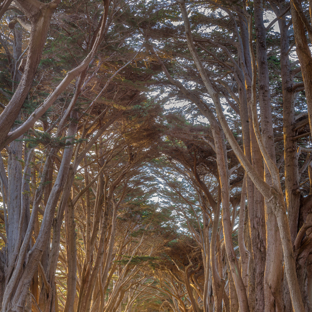 Cypress sunrise how041