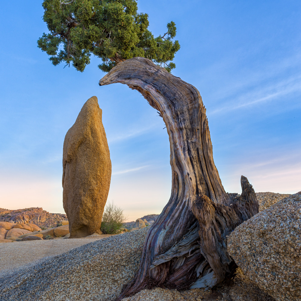Guardian juniper jbbtpv