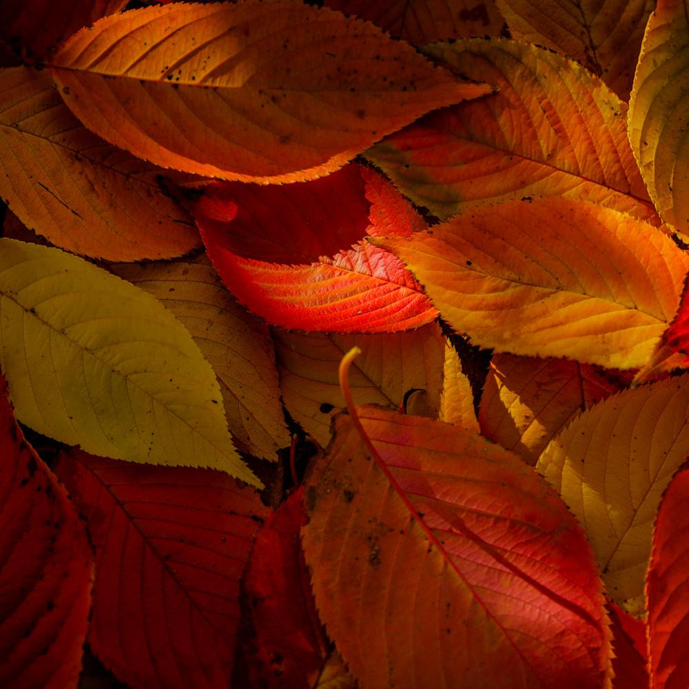 Leaves 9768 thcedu