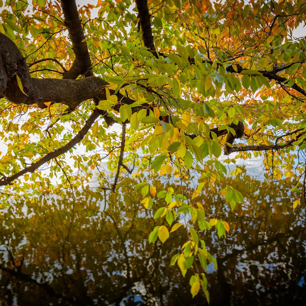 Leaves 9684 kcpswb