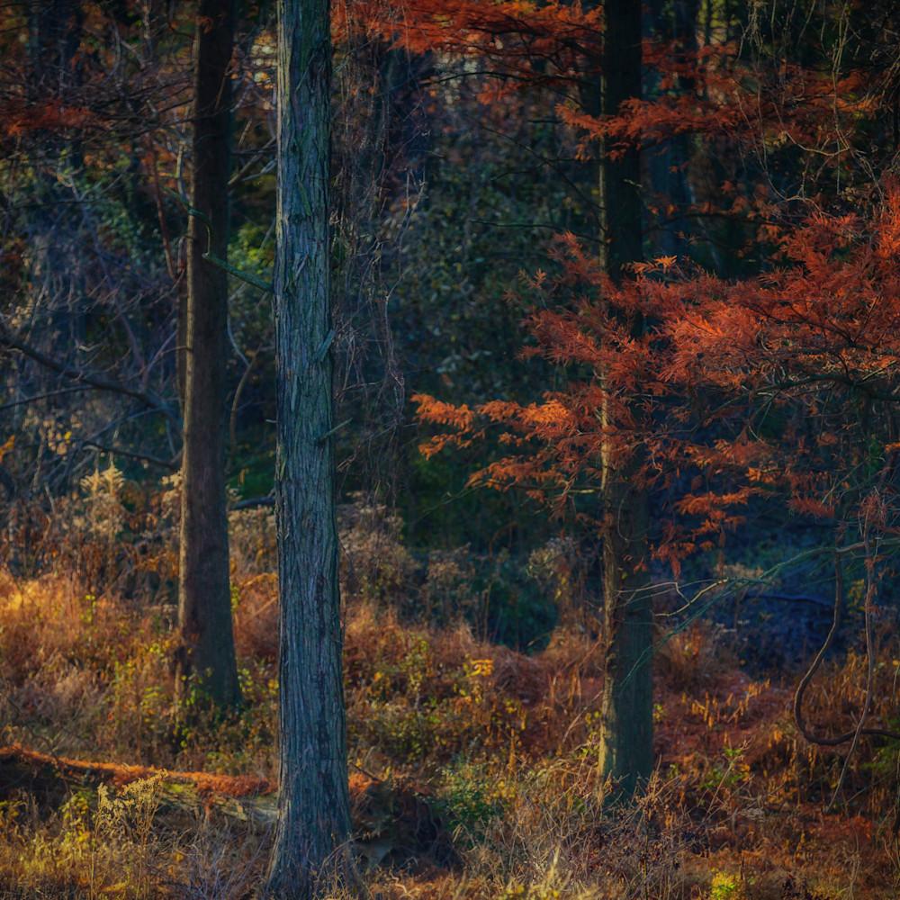 Trees  14 hl7wnz