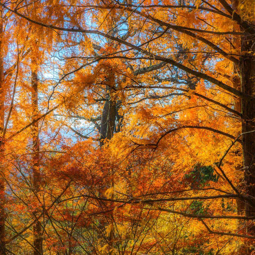 Trees  34 bxziwg