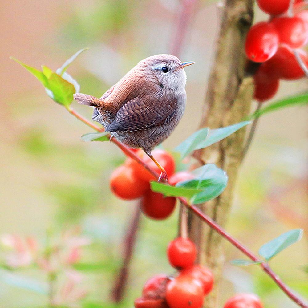 Garden birds 07 u16rfj