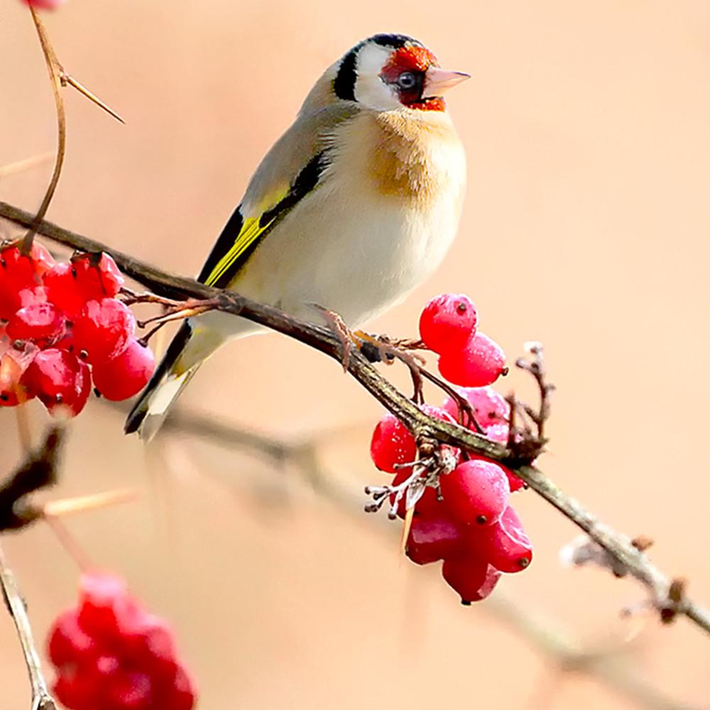 Garden birds 04 thidpp