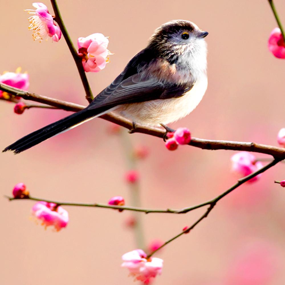 Garden birds 02 qyldga