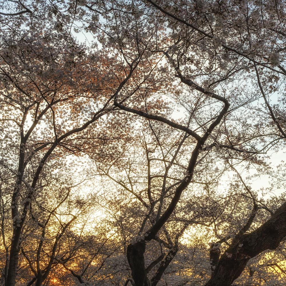 Trees  45 gqnl51