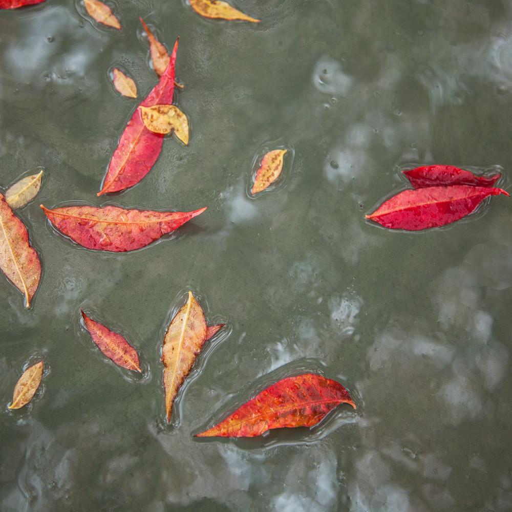 Red leaves on water esp273
