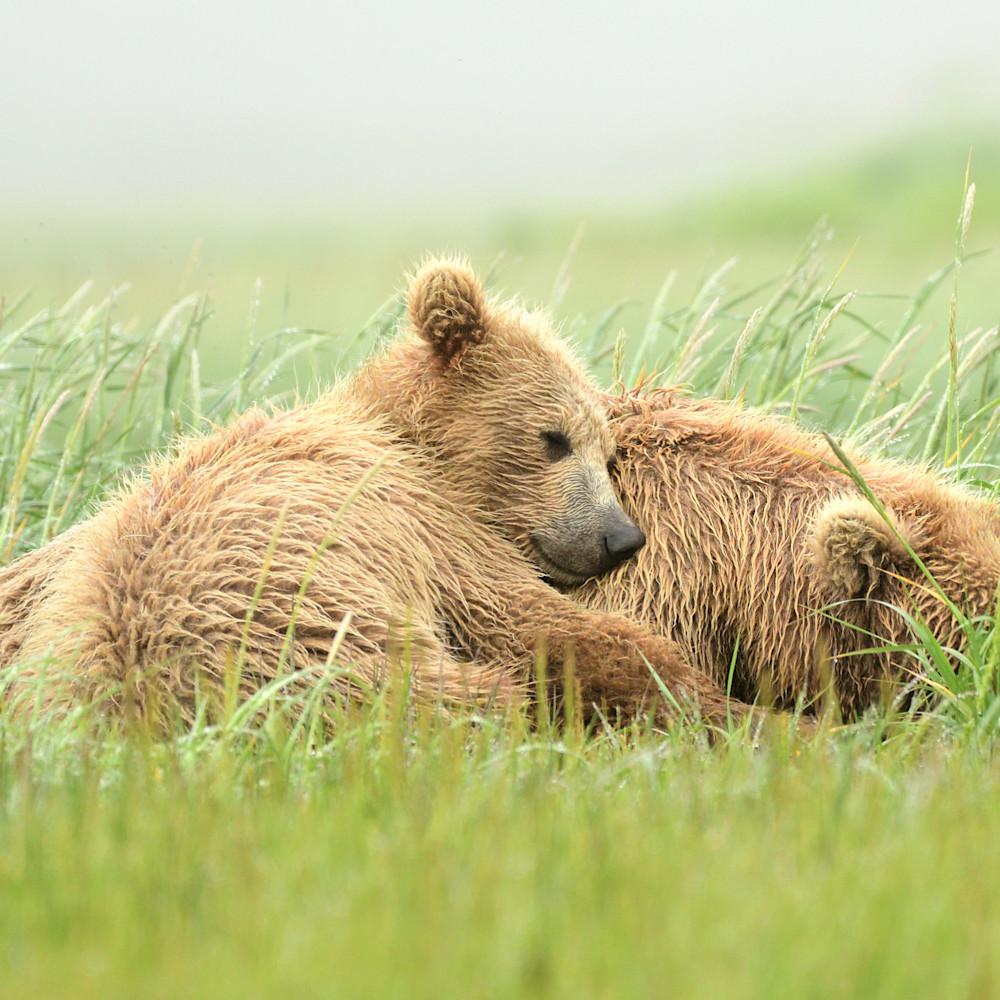Sleepy bear d6g2aw