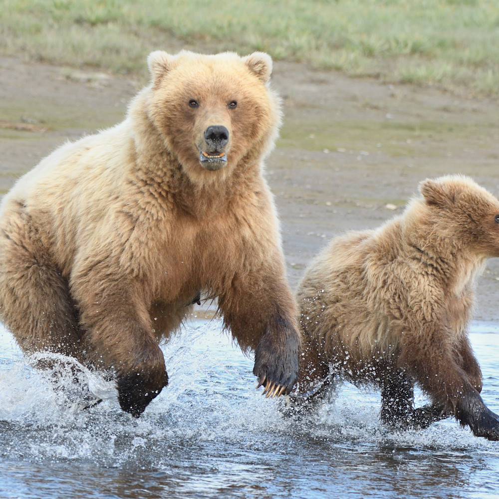 Momma and little bear   the chase is on ttwhh2