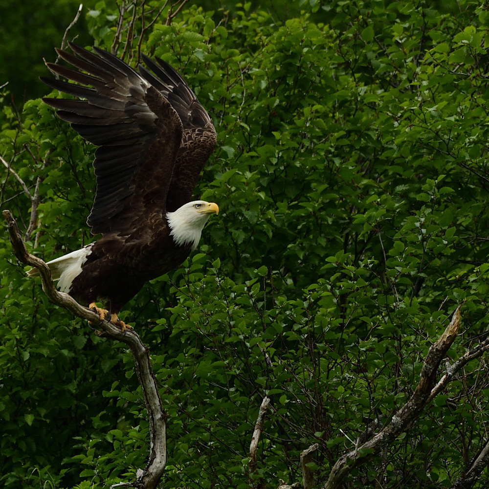 Eagles launch land6y