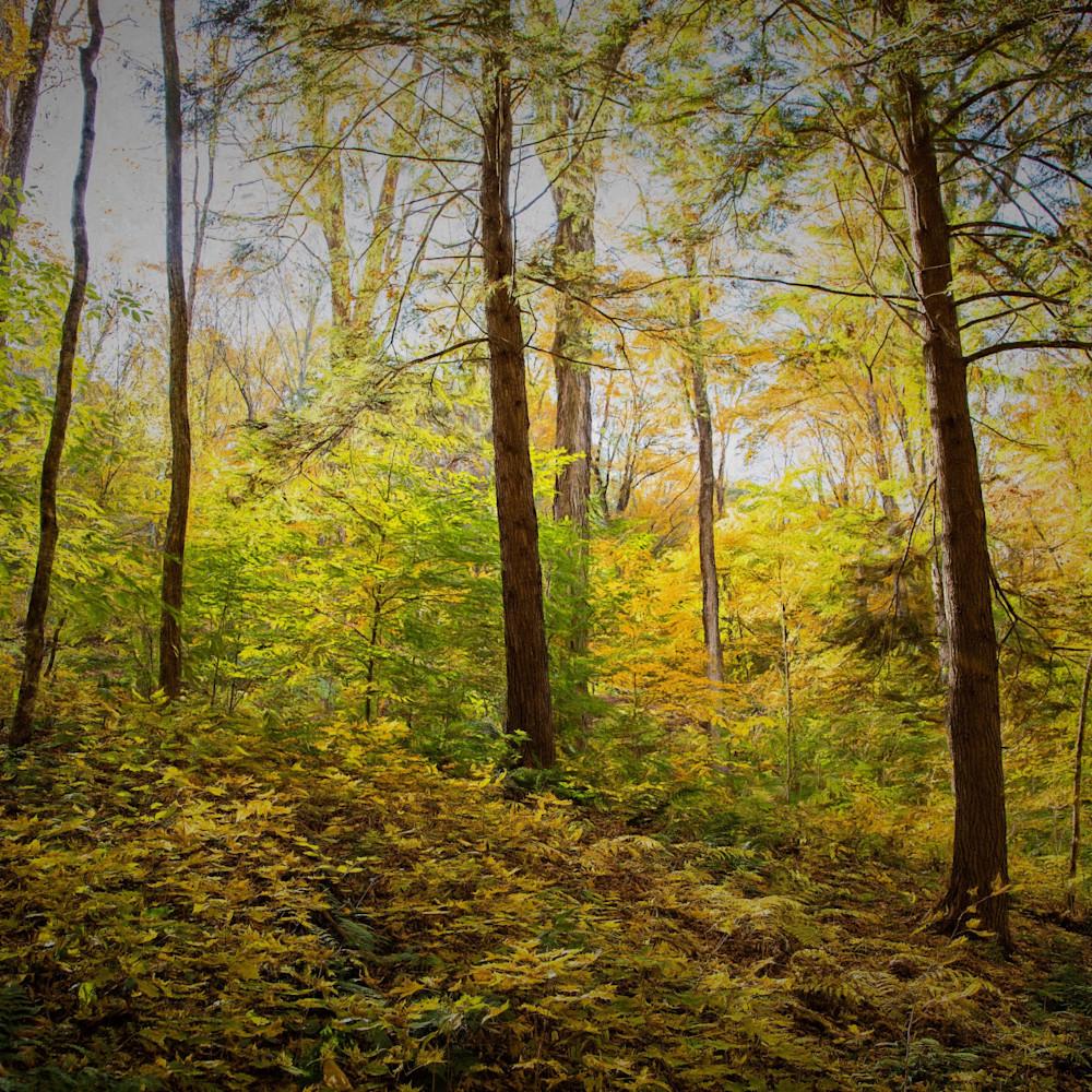 The woods 0721 4 divdmo