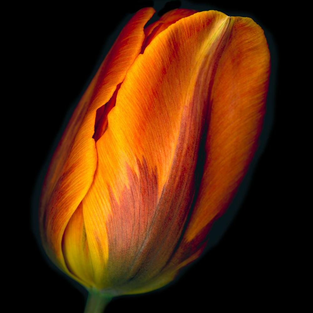 180505 ahern conversation orange tulip 1 30x40x300 tahy42