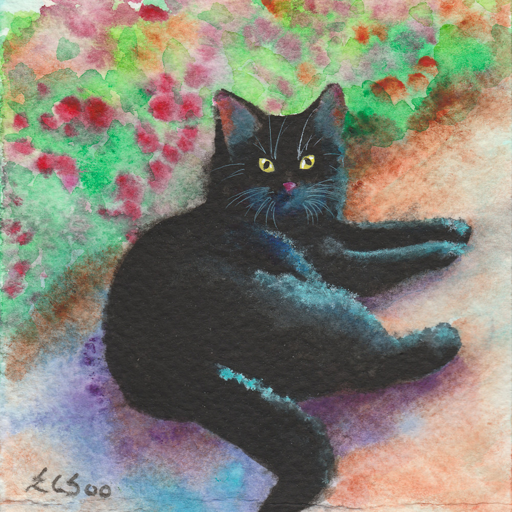 9 black cat resting lgdy3r
