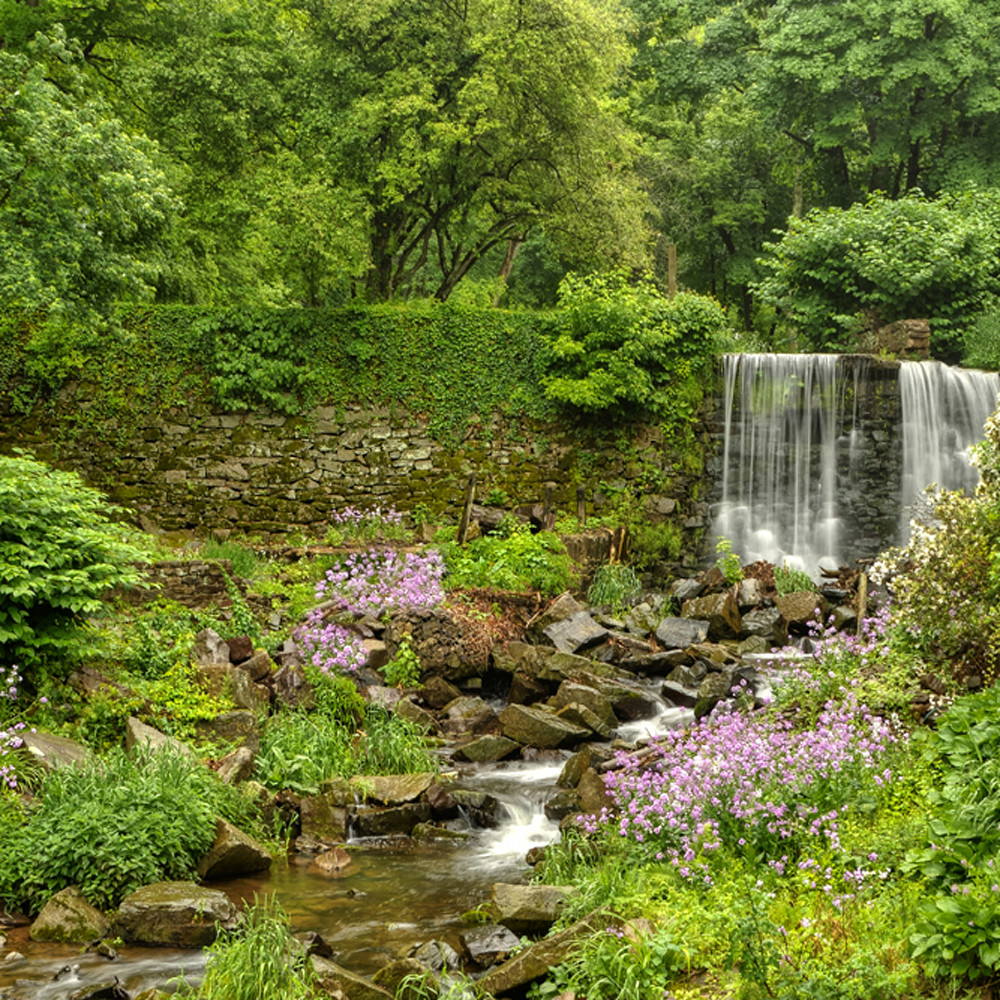 Spring on cuttalossa creek macsmo
