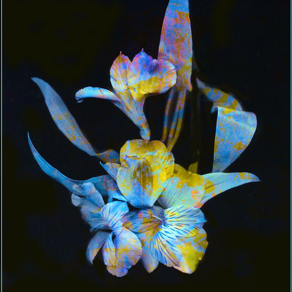 Flowers 18 oi87aa