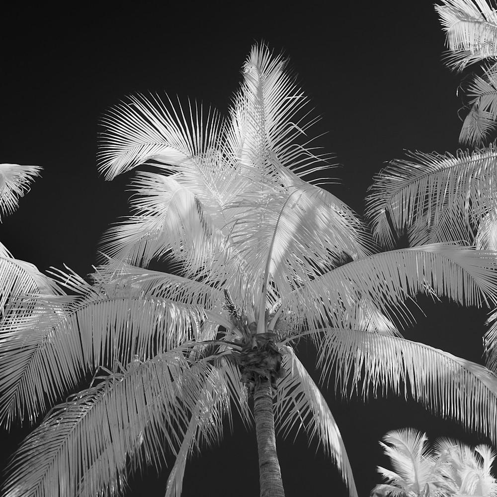 Infrared palms 01 m8kthh