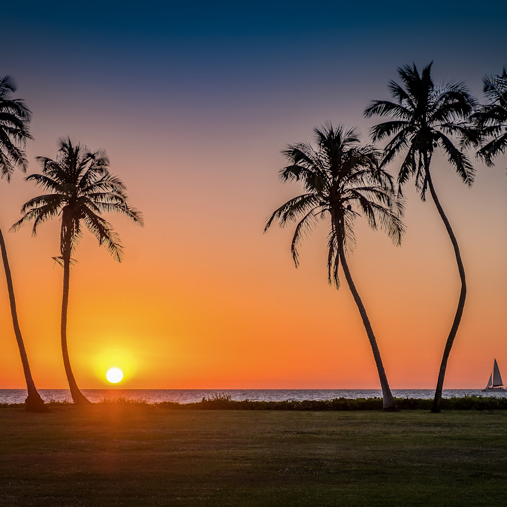 Sunset palmtrees p0fjlk