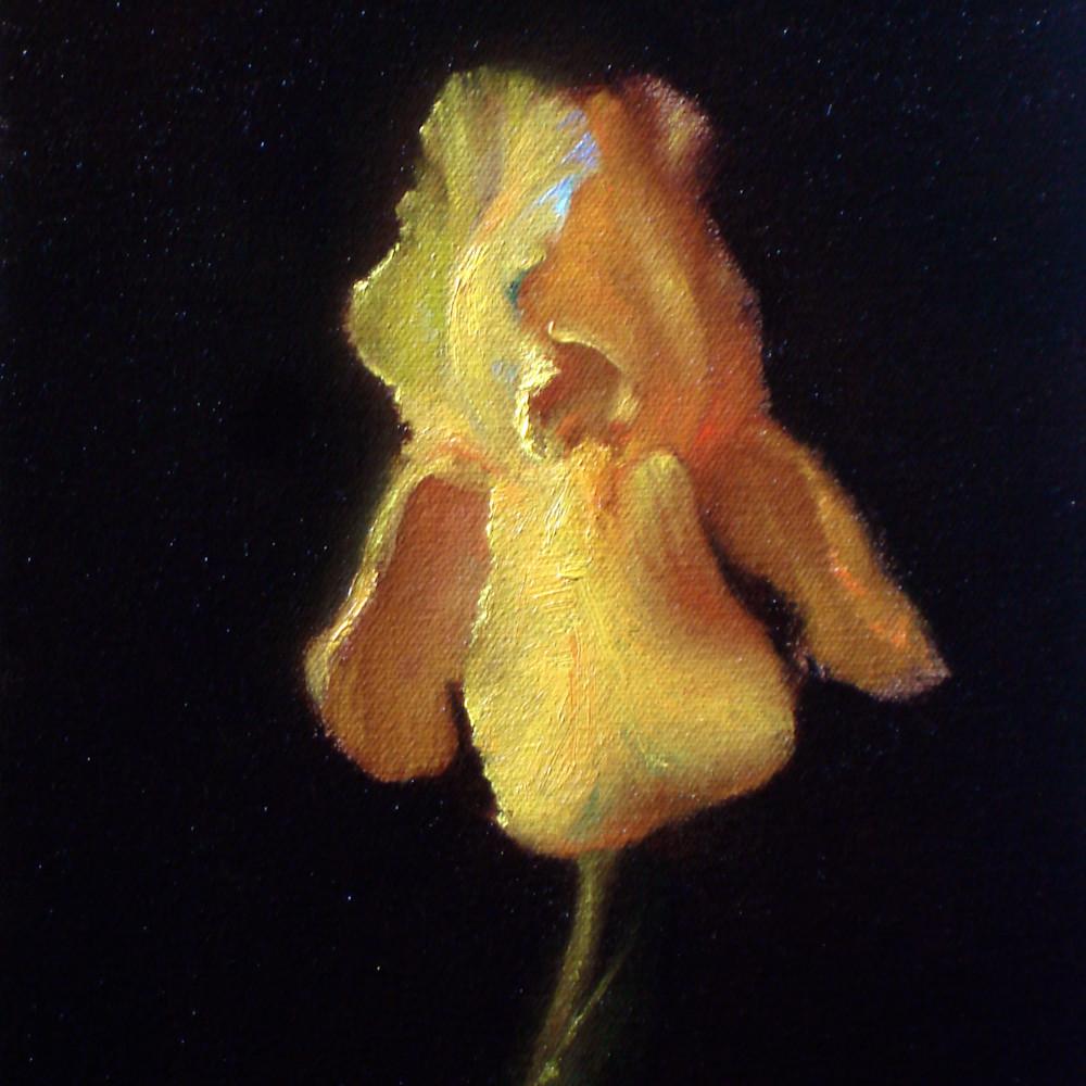 Iris wex58p