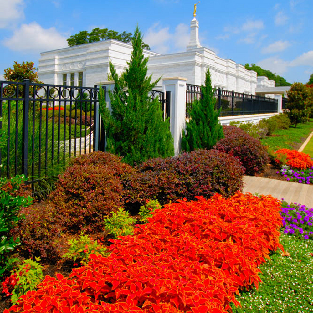 Hank delespinasse memphis temple   flower by day nhlcsp