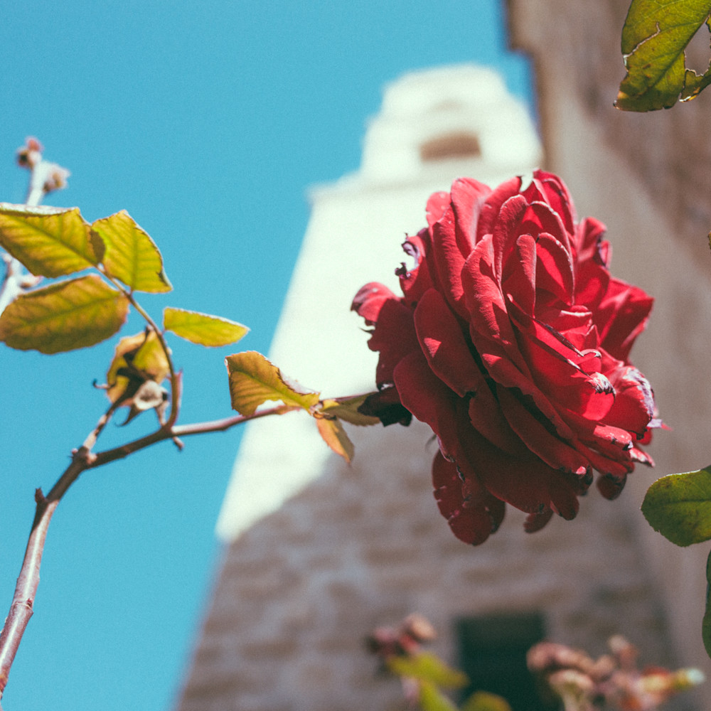 The rose of jacob s well uzgyhc