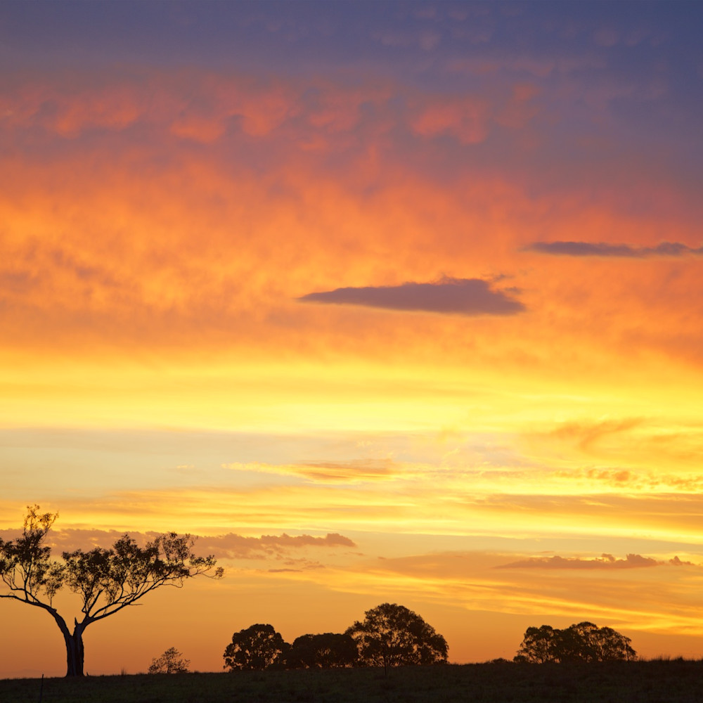 Golden sentinel hunter valley australia landscape photo print. c7nmxv