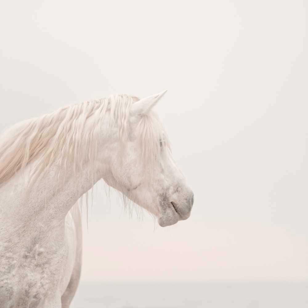 1to1 unicorns do exist low res py9bsd
