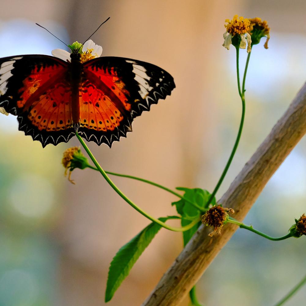 Flowers and butterflies 60 muw0es