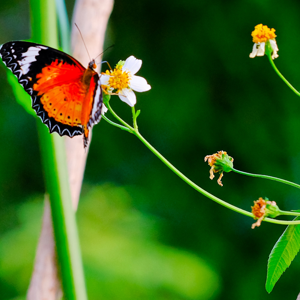 Flowers and butterflies 64 znirv0