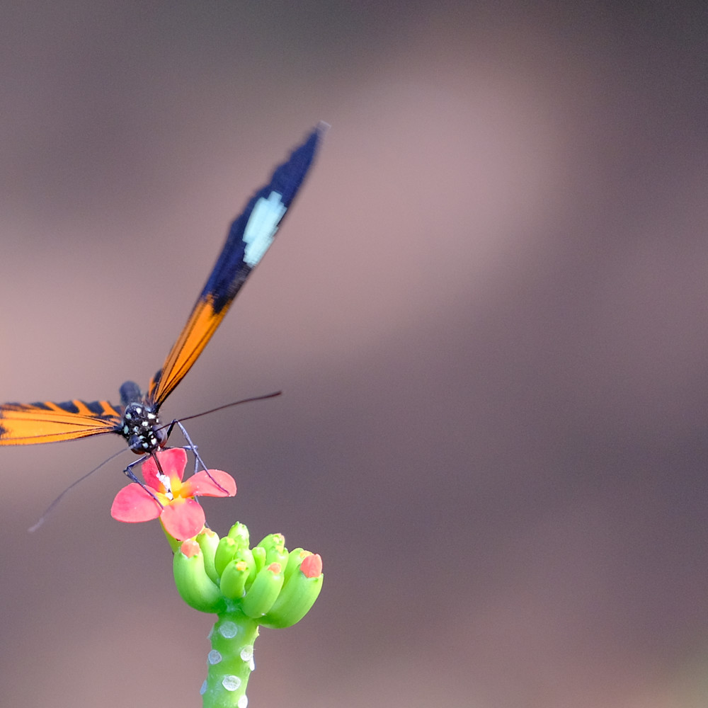 Flowers and butterflies 68 beoom1