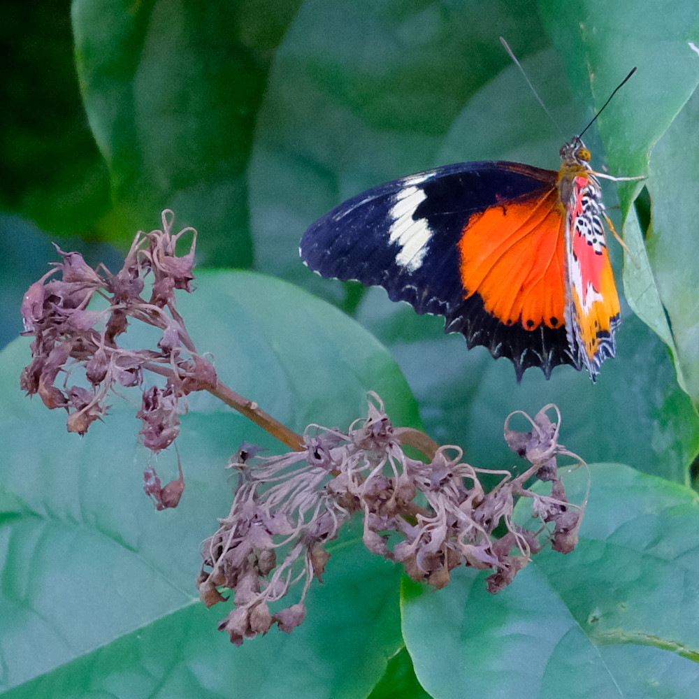Flowers and butterflies 71 xidyht