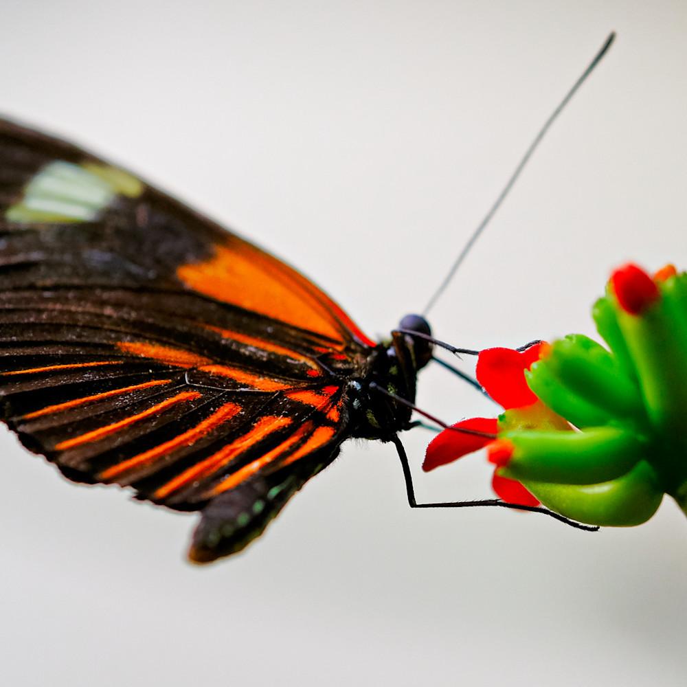 Flowers and butterflies 101 dkqzsg