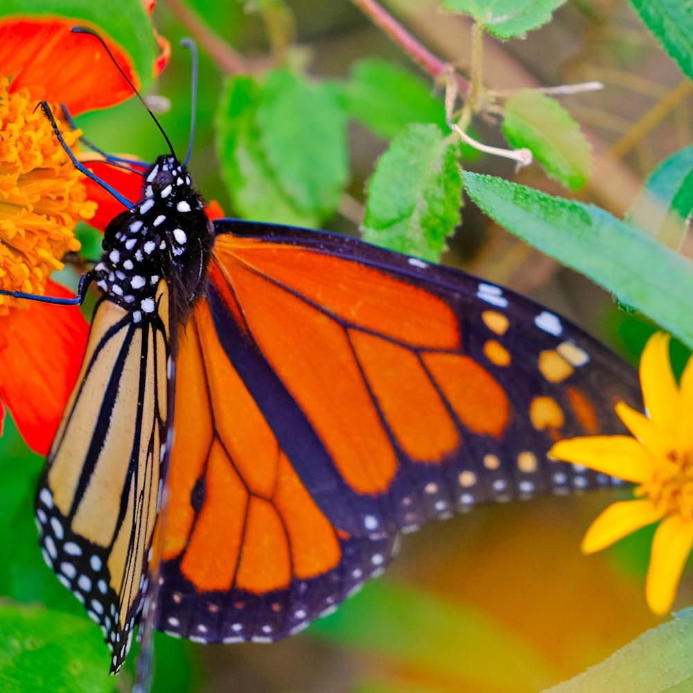 Flowers and butterflies 174 yfwa7k