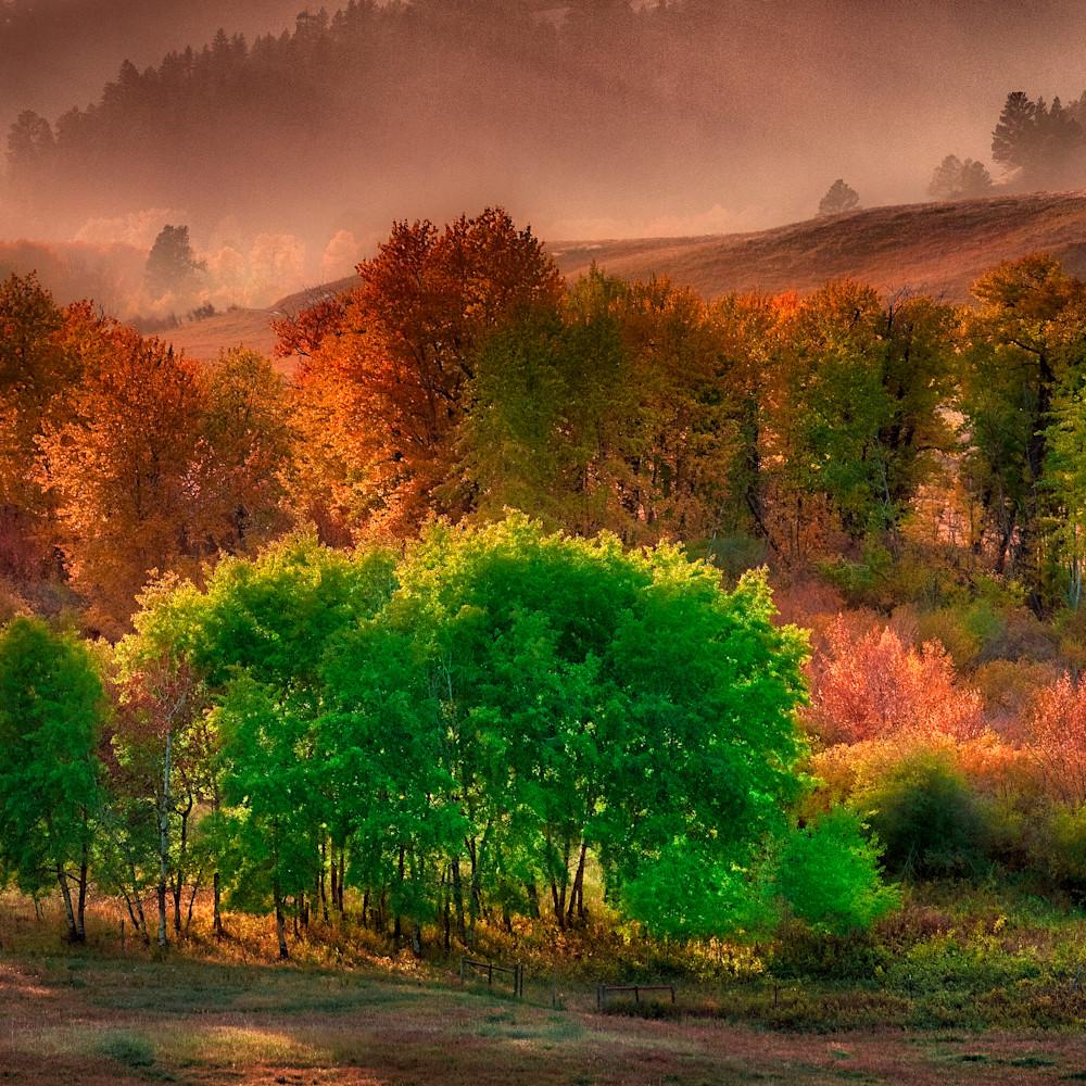 Misty morning o7zajj