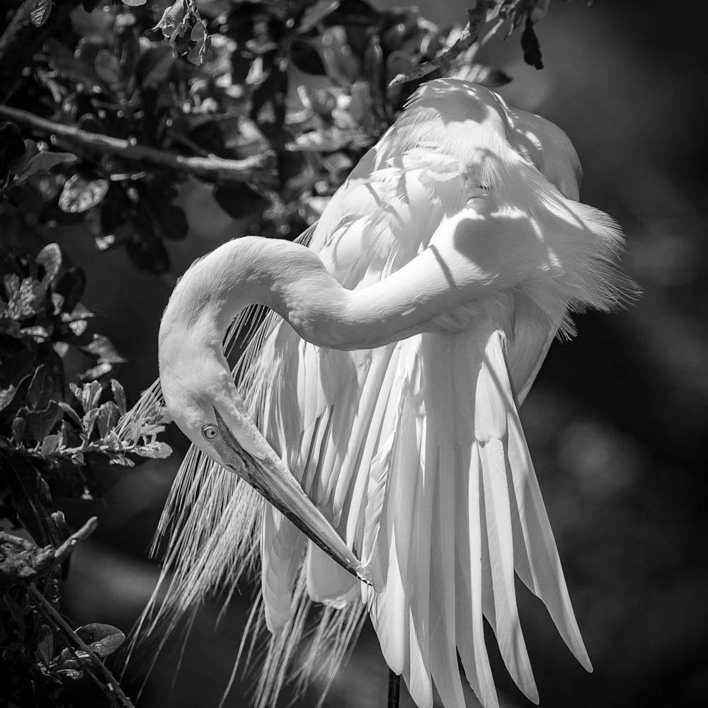 Prunning egret m4qpdz