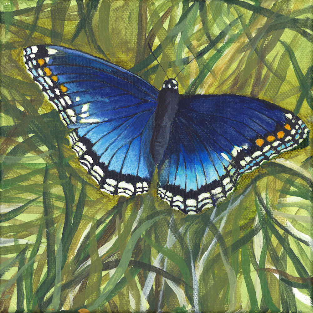 Red spotted purple usrsfg