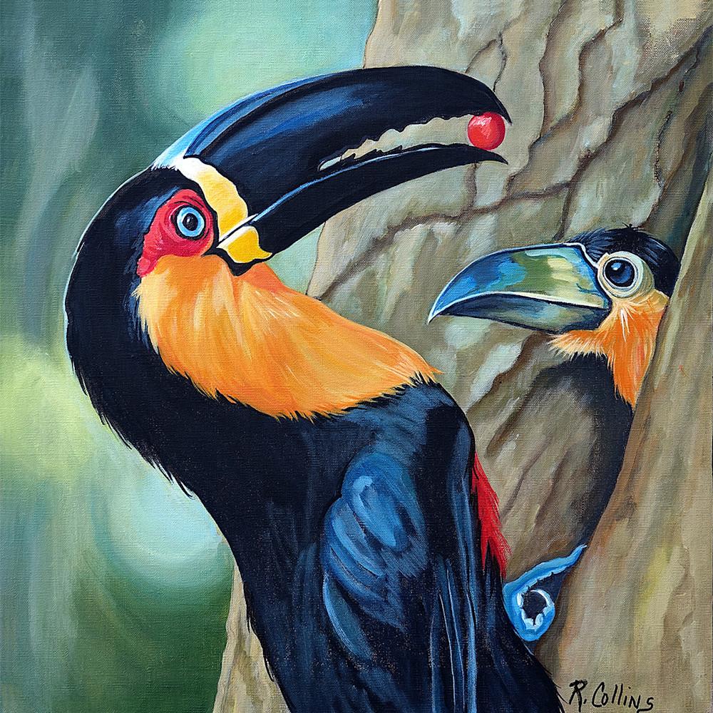 Keel billed toucan feeding chick ueyrrf