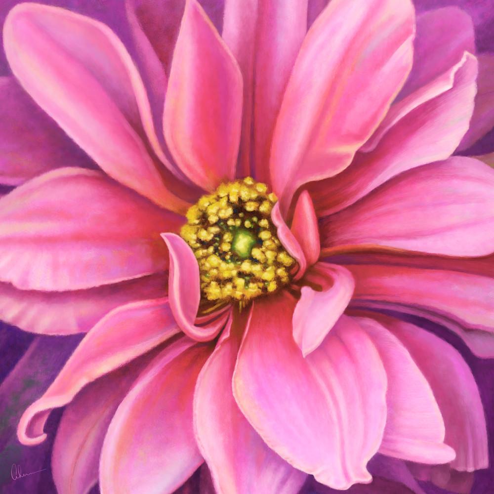 170308 ahern pink dahlia 30x30x300 metal print ycrgna