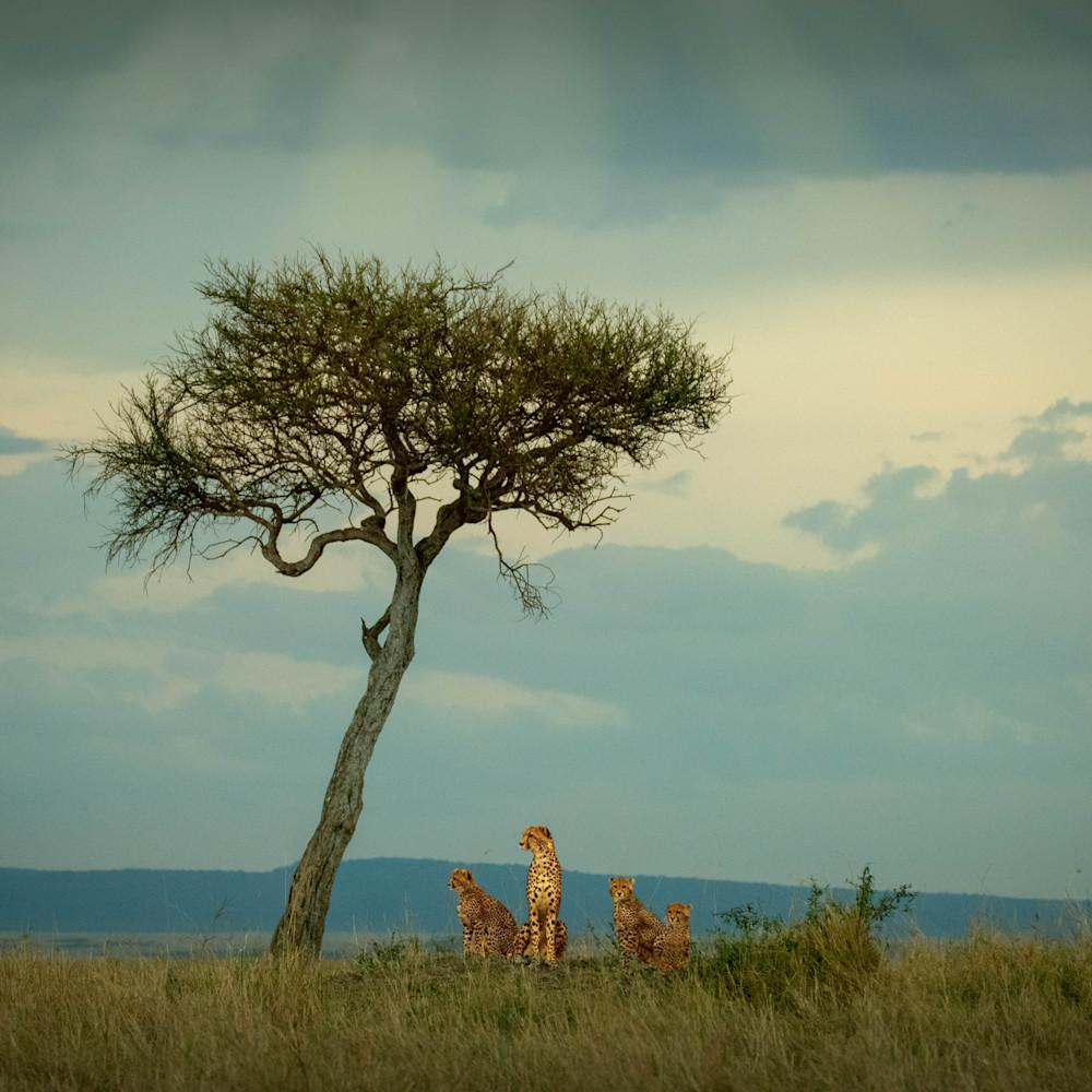 Africa landscape  5964 nxyqaa
