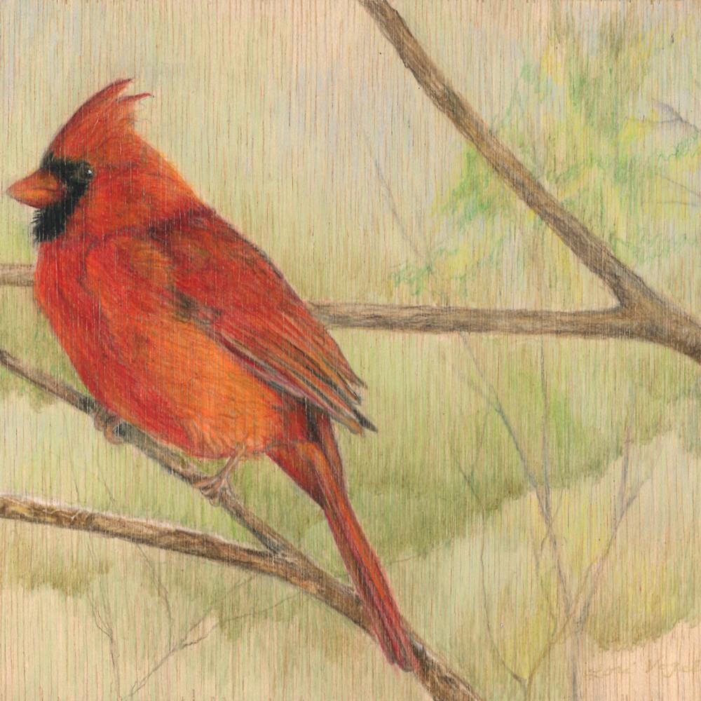 Male cardinal 2 2 e8bvwu