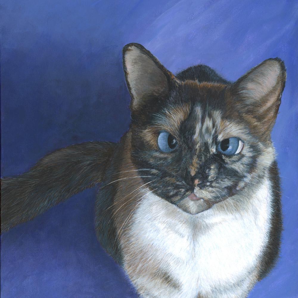 Cat 3 wscn4v