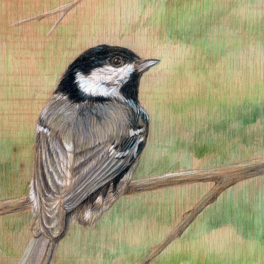 Gray bird 2 ykaepe