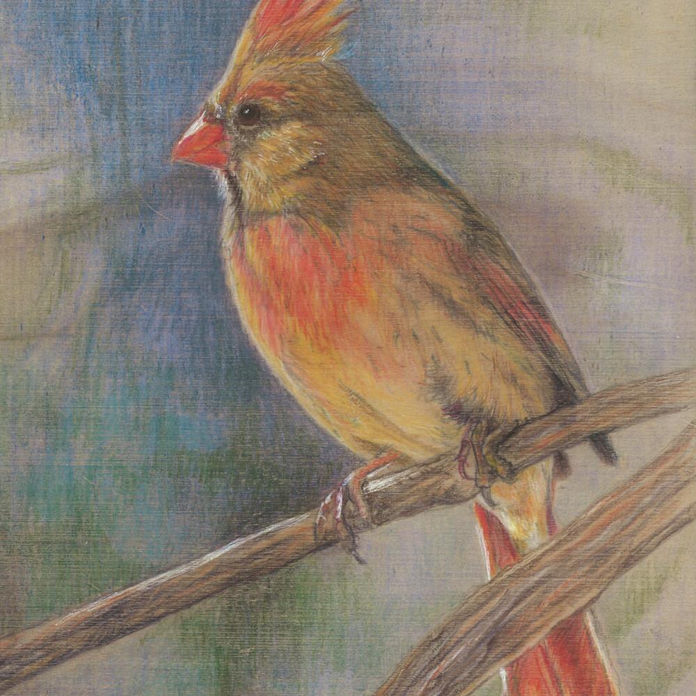 New cardinal 2 cmtx3d