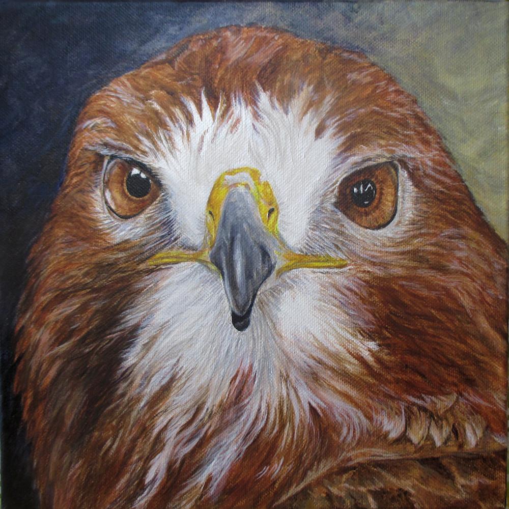 Red tail hawk 10x10 n9hoge